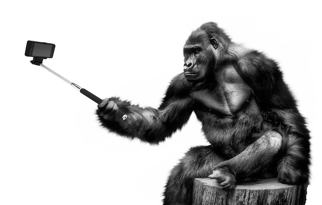 Gorilla selfie tele2 abonnement